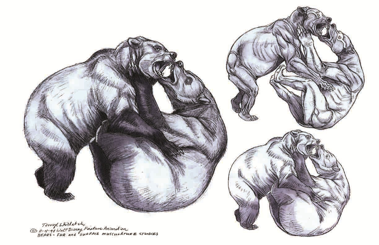 Bear Anatomy - Terryl Whitlatch - Random Wildlife - Animals ...