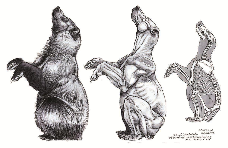 Bear Anatomy - Terryl Whitlatch - Random Wildlife - Animals ...